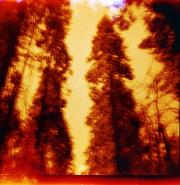 Photo Competition Climate Crisis Submission - Burning Woods