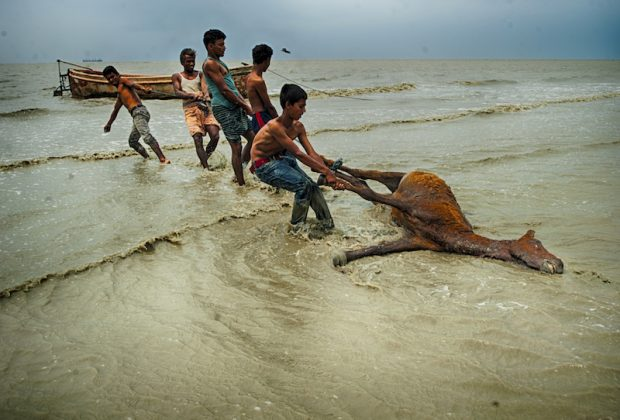Photo Competition Climate Crisis Submission - Dead Horse